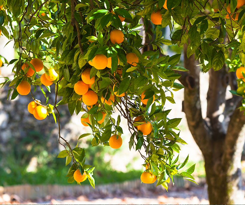 Ask Burton: Q: I have room for a few fruit trees in my ...