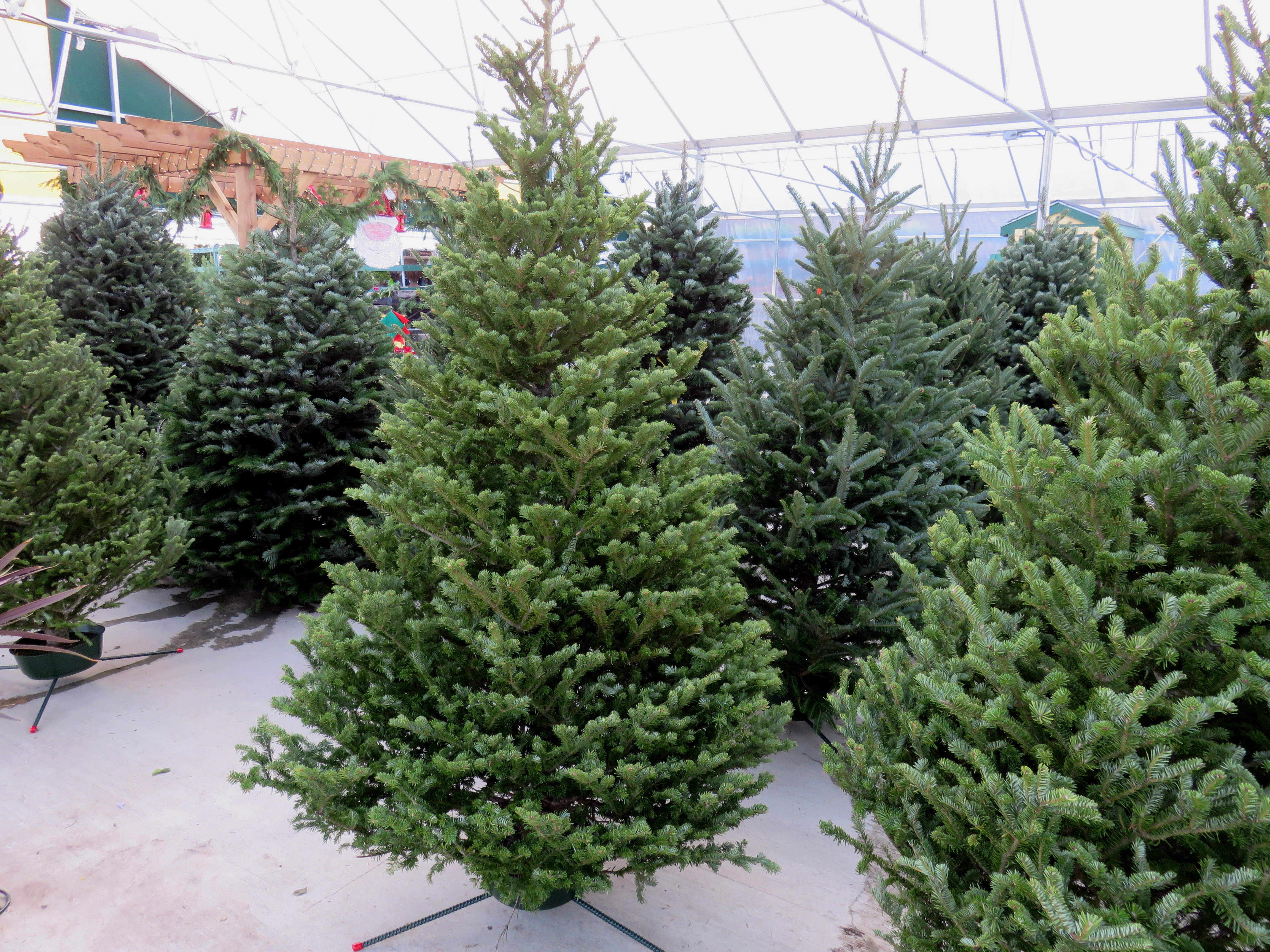 christmas tree delivery costco