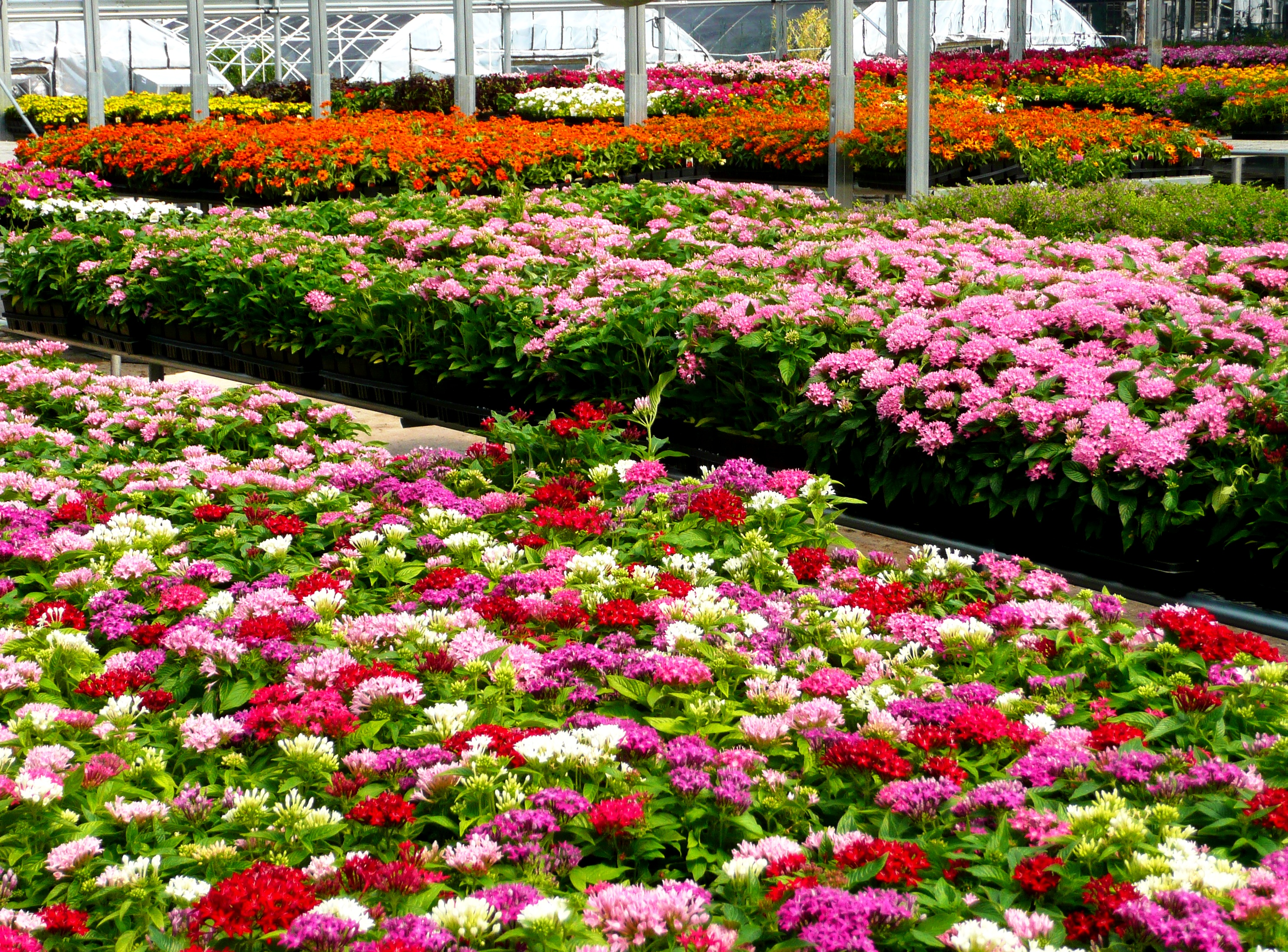 Growing spring summer flowers covingtons time for spring flower fundraising mightylinksfo