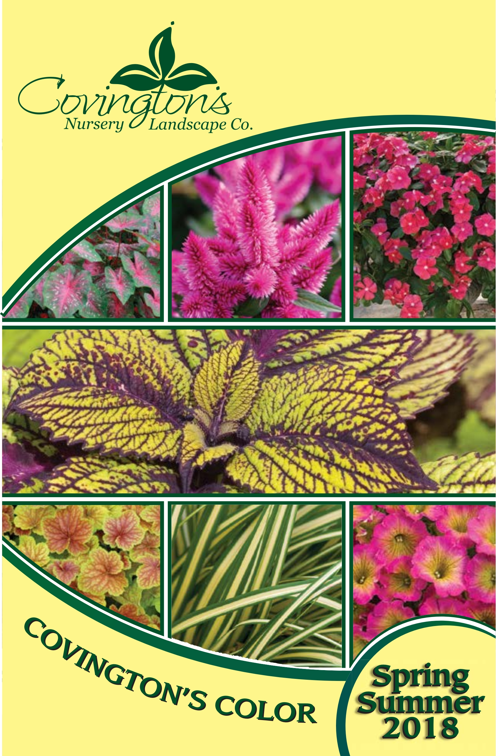 Gardening tips articles archives covingtons 2018 spring bedding plant guide nvjuhfo Choice Image